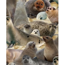 North American Wildlife- Seals ES503