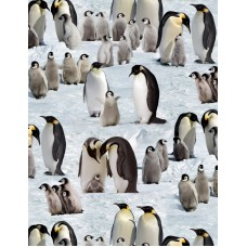 Emperor Penguins ES490